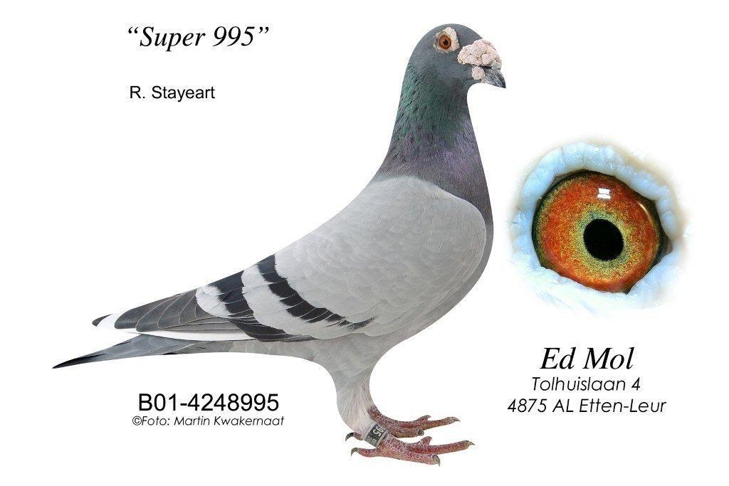 01-4248995
