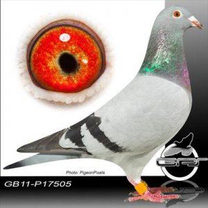 GB11-P17505