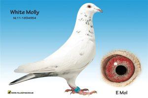 white molly